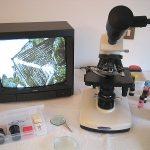 La crescita di un microcristallo in tempo reale