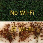 Esperimenti sugli effetti biologici del Wi-Fi