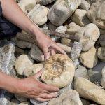 Come osservare e identificare i fossili