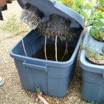 Come realizzare una coltura idroponica
