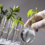 Esperimenti di base sulla fotosintesi clorofilliana