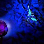 Come andare a caccia di ragni e scorpioni