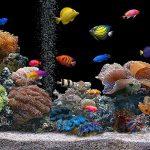 Come allestire un acquario tropicale