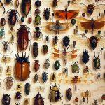 Come creare una collezione di insetti