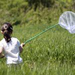 Come catturare gli insetti con trappole e altro