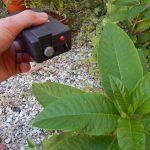 Come studiare la comunicazione fra piante